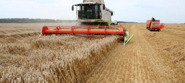 Рекордные жатва. Винницкие аграрии намолотили второй миллион тонн зерна