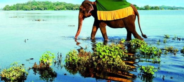 Что обязательно нужно посмотреть на Шри-Ланке?