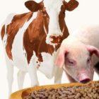 5 причин использовать кормовые добавки в кормлении животных