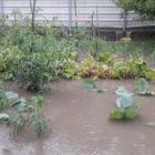 На Винниччине из-за непогоды затопило огороды и дворы, дороги завалило деревьями. Фото