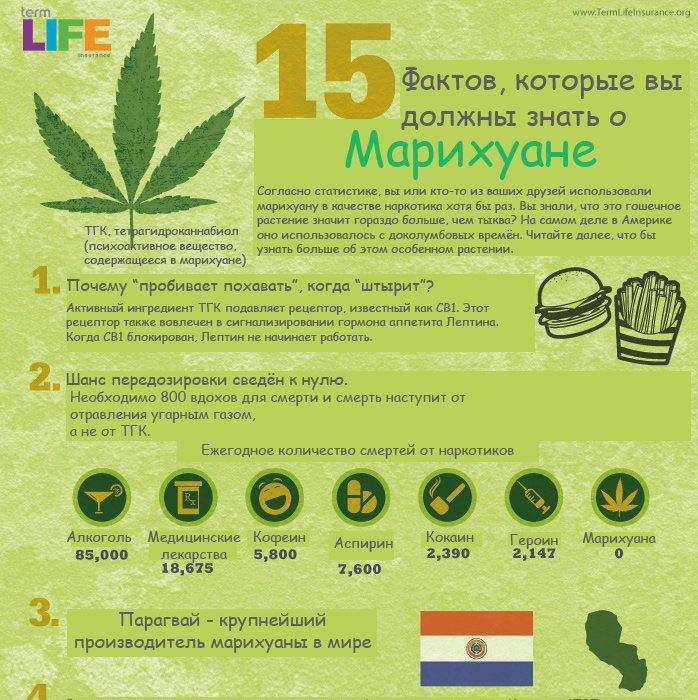 сколько дней держится марихуана в моче